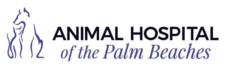 Animal Hospital of The Palm Beaches